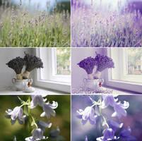 LT's Soft Lavender Action by Lady-Tori