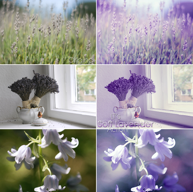 LT's Soft Lavender Action