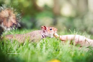 Mm monkey nuts by Lady-Tori