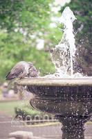 Birdie Bath by Lady-Tori