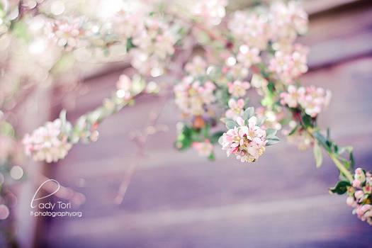 Day Twenty-four - Lilac