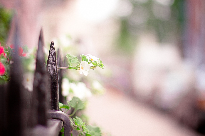 Day Forty - White Flowers by Lady-Tori