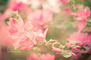 Day Forty-Five - Pink Flowers