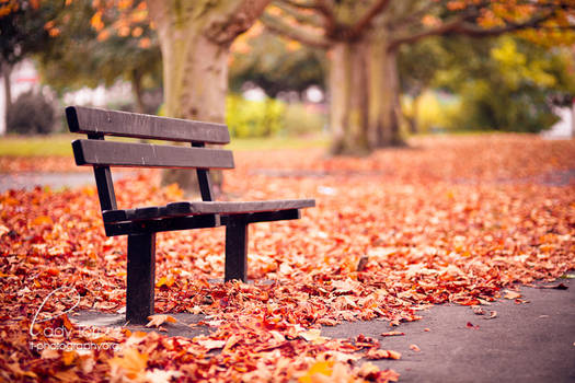 Autumn by Lady-Tori
