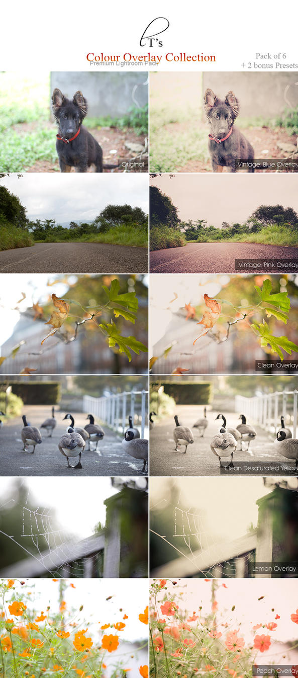 Colour Overlay Collection - Lightroom Preset by Lady-Tori