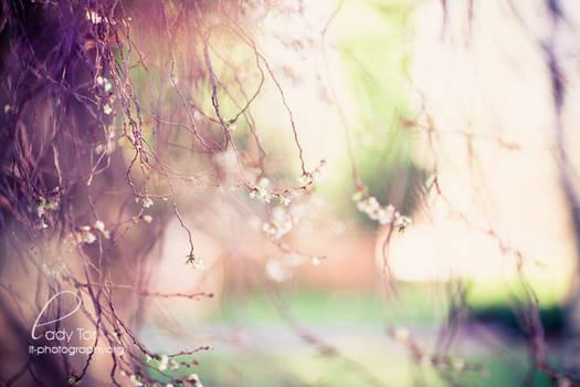 Fairy Wonderland by Lady-Tori