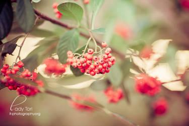 Berrylicious by Lady-Tori