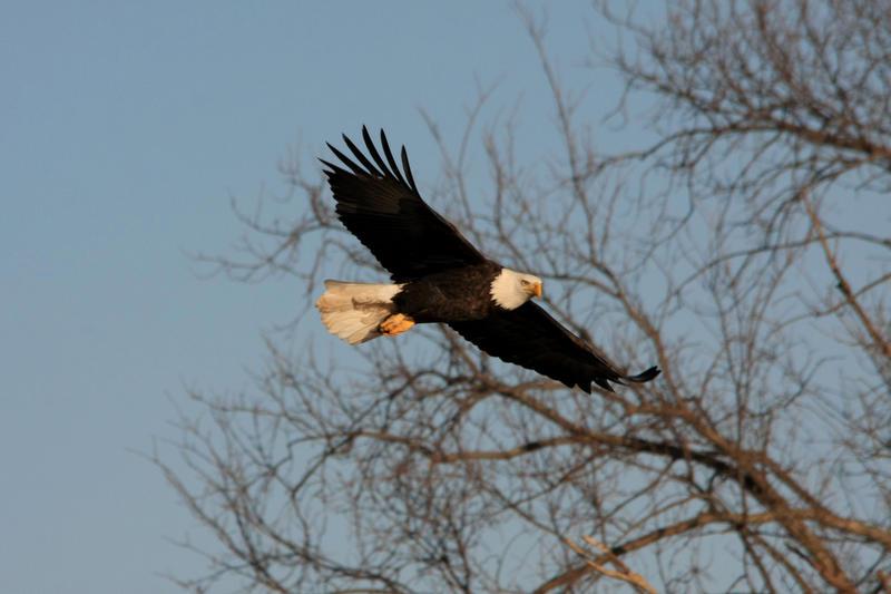 Free Bird by olearysfunphotos