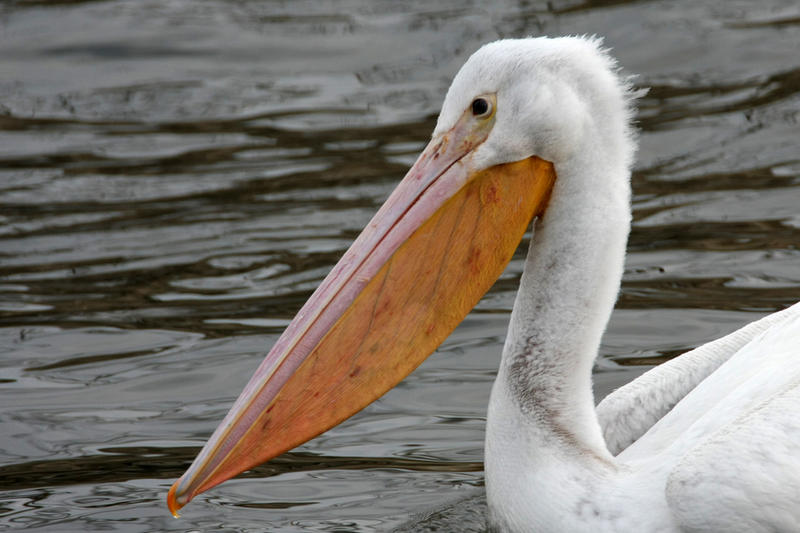 Pelican Gifts And Home Decor