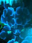 blue flowers by cybele93