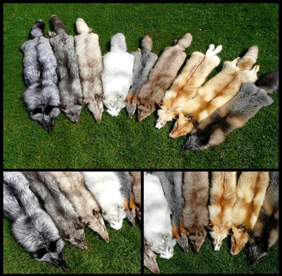 Fox Rondel by CabinetCuriosities