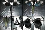 Anatomy: Magpie