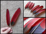 White-Cheeked Turaco Wing Feathers