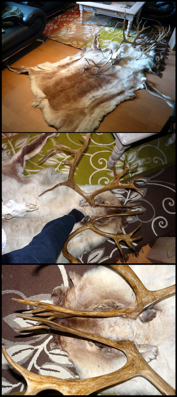 Most Badass Reindeer Pelt Ever by CabinetCuriosities