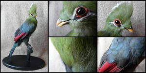 Knysna Turaco Mount #1 by CabinetCuriosities