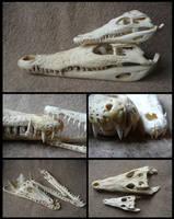 Comparison: Nile Crocodiles by CabinetCuriosities