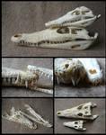 Comparison: Nile Crocodiles