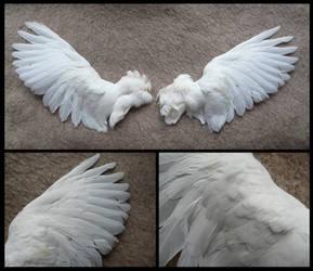 White Pigeon Wings