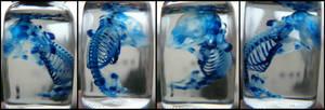 Diaphonized Rat Fetus Blue by CabinetCuriosities