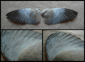 Collared Dove Wings by CabinetCuriosities