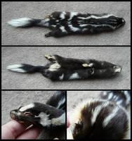 Western Spotted Skunk Pelt