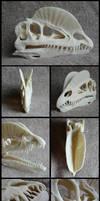 Dilophosaurus Skull