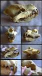 Giant Hyena Skull