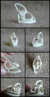 Veiled Chameleon Skull