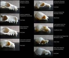 Types of Bats by CabinetCuriosities