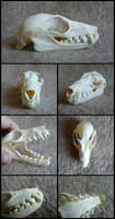 Kalong Skull by CabinetCuriosities