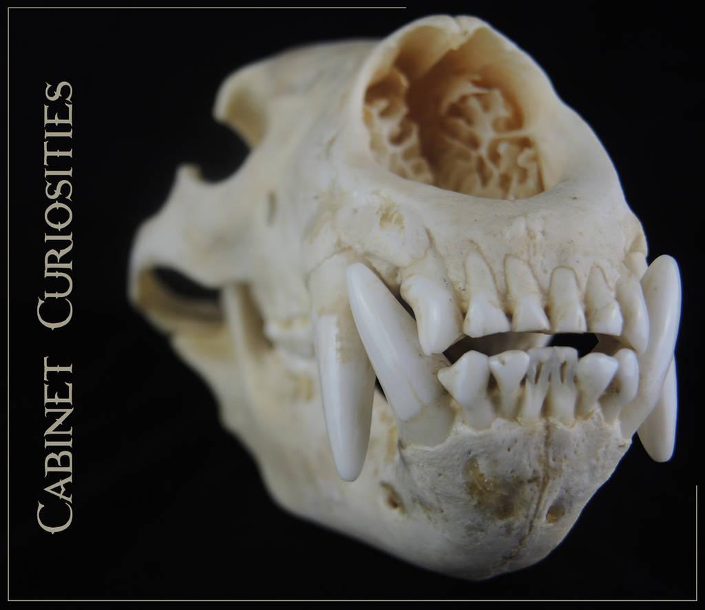 CabinetCuriosities's Profile Picture