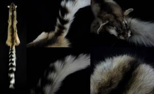 Ringtail Cat Pelt by CabinetCuriosities