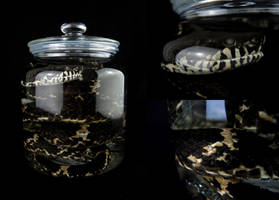 Wet Specimen: Amur Rat Snake by CabinetCuriosities