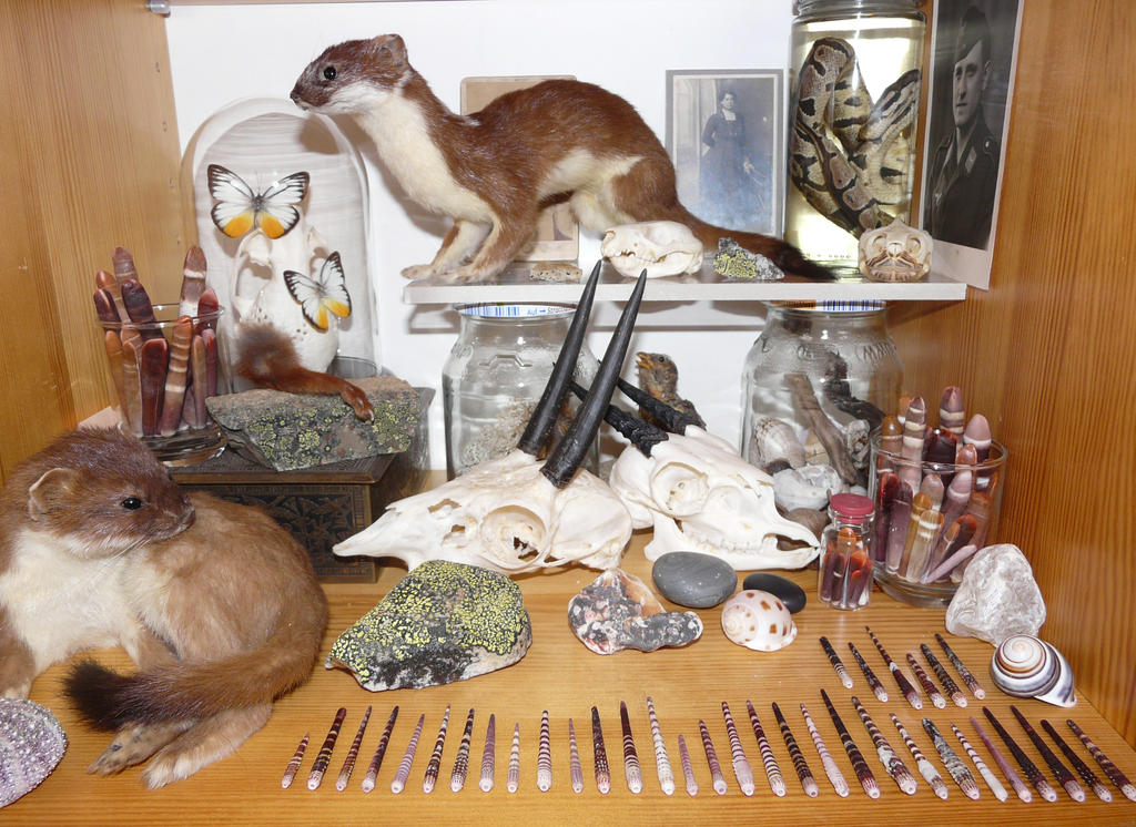 Collection by CabinetCuriosities