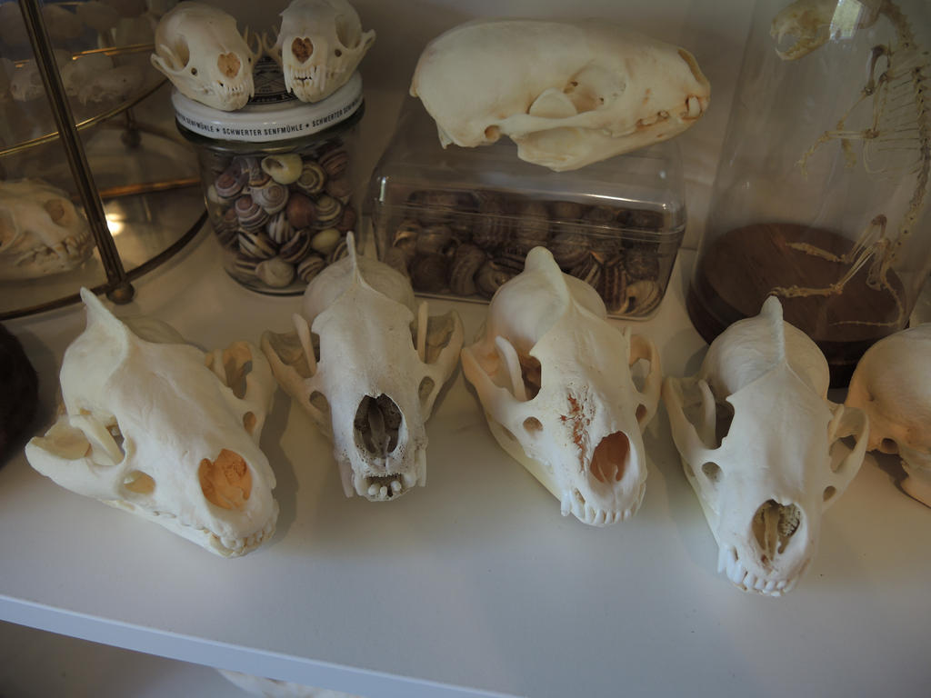 European Badgers by CabinetCuriosities