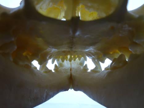 All Teeth