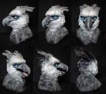 Harpy Eagle Turnaround