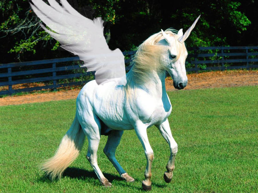 Unicorn + Pegasus? by AikoNekoOtaku on DeviantArt