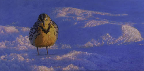 Meadowlark In The Snow by Keithspangle