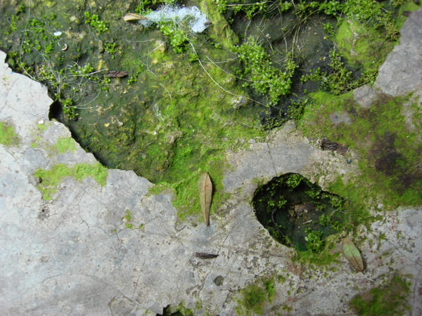 green dirt 3 by ihaTeyouNow