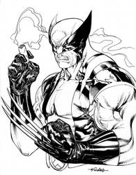 Wolverine - Old Habits Die Hard by SpiderGuile