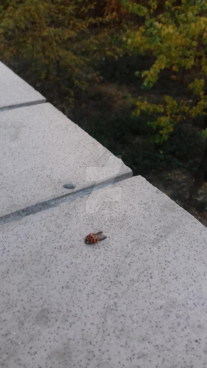 Ladybug1 by ACE977