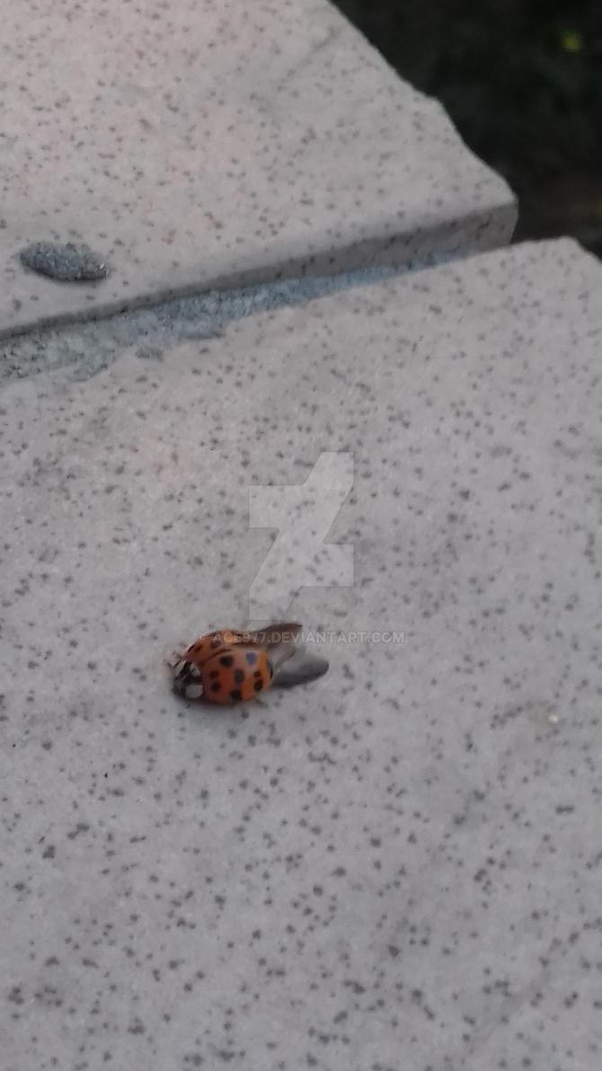 Ladybug2 by ACE977