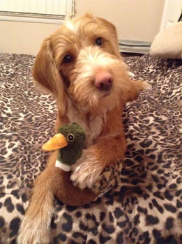 Ranger with his Ducky!