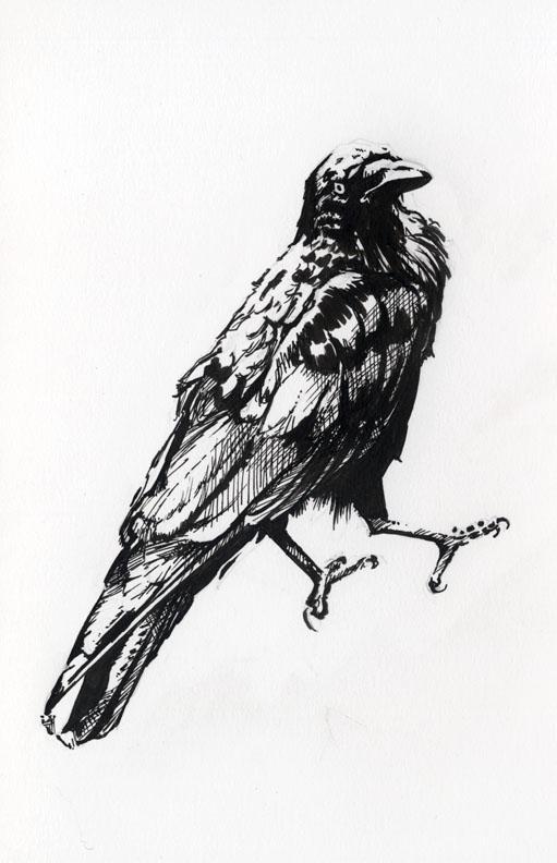 Raven 2 by AllisonSohn