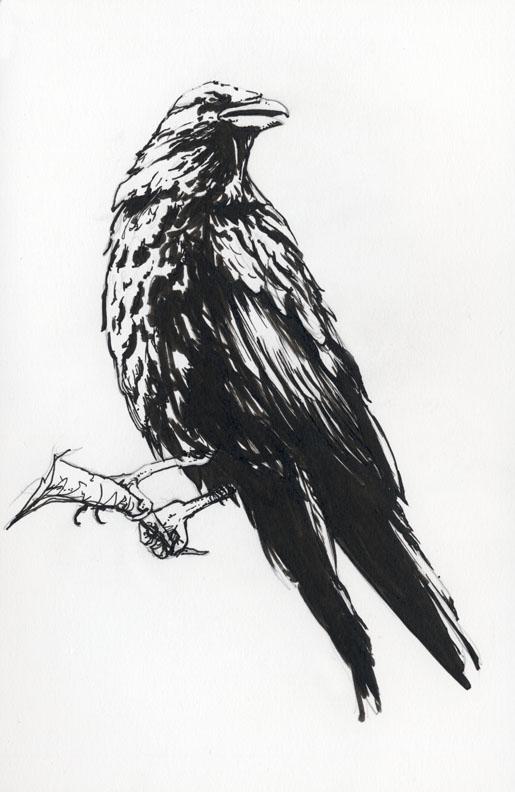 Raven 1 by AllisonSohn
