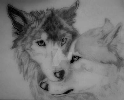 Pencil Drawing of Two Wolves by Skyhorse-Studio