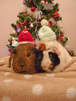 Christmas Piggies by Crafty-lil-vixen