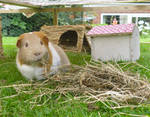 She loves her hay