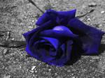 trandafir albastru by steff1594
